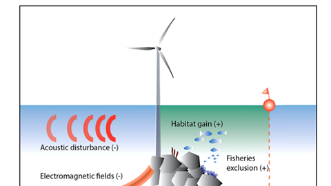 Effects of offshore wind farms on marine wildlife